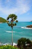 Palm op tropische overzeese achtergrond Stock Afbeeldingen