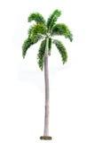 palm op witte achtergrond met het knippen van weg wordt geïsoleerd die royalty-vrije stock afbeeldingen
