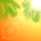 Palm on orange sunburst Stock Images