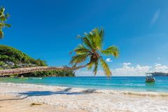 Palm over the beautiful Jamaica beach. royalty free stock photography