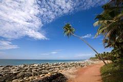 Palm over blauwe hemel Royalty-vrije Stock Afbeelding