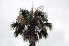 Palm over a Cloudy Sky Royalty Free Stock Images