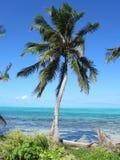Palm over het water Stock Afbeeldingen