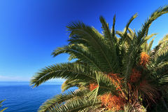 Palm over the sea Stock Photo
