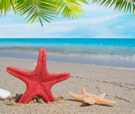 Palm over starfish Stock Photos