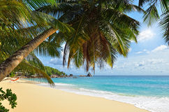 Palm over tropical beach royalty free stock photo