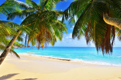 Palm over tropical beach Stock Images