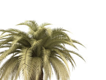 Palm over white Royalty Free Stock Photos