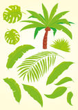 Palm and palm leaves. Palm tree and palm leaves Royalty Free Illustration