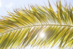 palm royalty-vrije stock fotografie