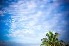 Palm panorama and sky with room for text Royalty Free Stock Photos