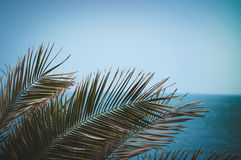 Palm paradise sea. Palm tree on the beach Stock Photography