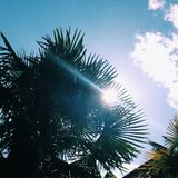 Palm paradise. Sunshine through Palm trees Royalty Free Stock Photo
