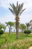 Palm in park in Antalya Stock Image