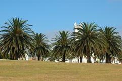 palm park drzewa fotografia stock