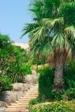 palm park drzewa Zdjęcie Stock