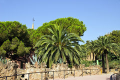 Palm in the park Guell Stock Photography