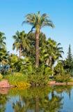 Palm park Stock Photography