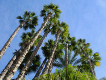 Palm parkerar Royaltyfria Bilder