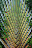 Palm Pattern. The palm forms an interesting interwoven pattern Stock Photos