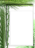 Palm photo frame. Frame created with  palm foliage for photos Stock Photo