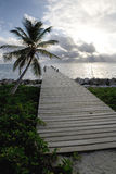 Palm and Pier at Sunrise. A pier and palm tree in the early morning sunlight on Ambergris Caye in Belize Stock Photos