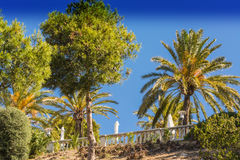 Palm and pine trees Stock Photo