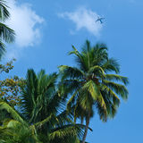 Palm and plane. Airplane against a palms and blue sky Stock Images