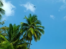 Palm and plane. Tropics palm and plane against a blue sky Stock Photo