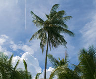 Palm and plane trace in blue sky. Tropical landscape with greenery. Stock Images