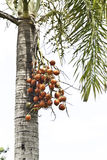 Palm plant Royalty Free Stock Photos