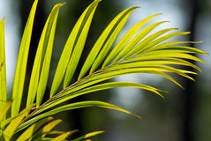 Palm plant limb stock image