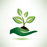 Palm and plant symbol Royalty Free Stock Photos