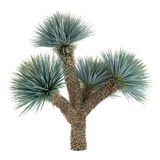 Palm plant tree isolated. Yucca Elat. See my other works in portfolio vector illustration