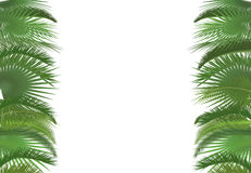 Palm plant tree leaves background template. Exotic tropical festival selebration greeting card. Palm poster wallpaper. Royalty Free Stock Image