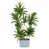Palm plant tree in the pot Royalty Free Stock Image
