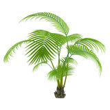 Palm plant tree Stock Photos