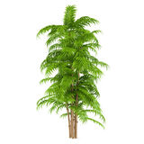 Palm plant tree Stock Photography