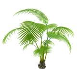 Palm plant tree Royalty Free Stock Photos