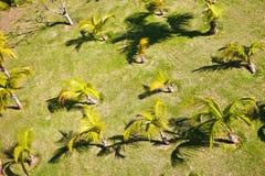 Palm plantation Stock Photos