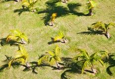 Palm plantation Stock Photography