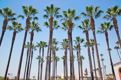 Palm plantation in front of Union Station, LA Royalty Free Stock Photo