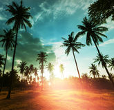 Palm plantation Stock Photography