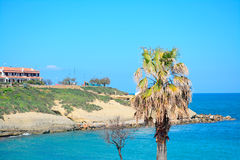 Palm in Porto Torres Stock Photography