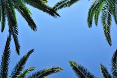 Palm postcard. Background for a postcard with palm leaves, blue sky background and a place for text Royalty Free Stock Photos