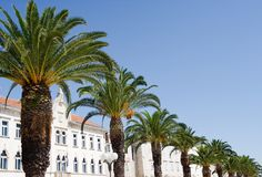 Palm Promenade in Split Stock Images