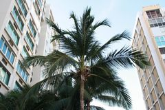 Palm in Puerto Rico stock afbeelding