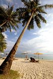 Palm at a quiet beach in Malaysia Royalty Free Stock Photo