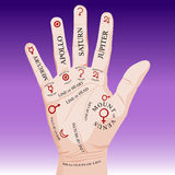 Palm Reading Palmistry Stock Images