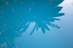 PALM REFLECTING IN POOL. Palm tree reflecting in swimming pool royalty free stock image